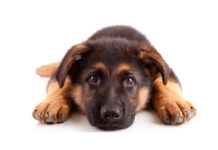 austin dog names
