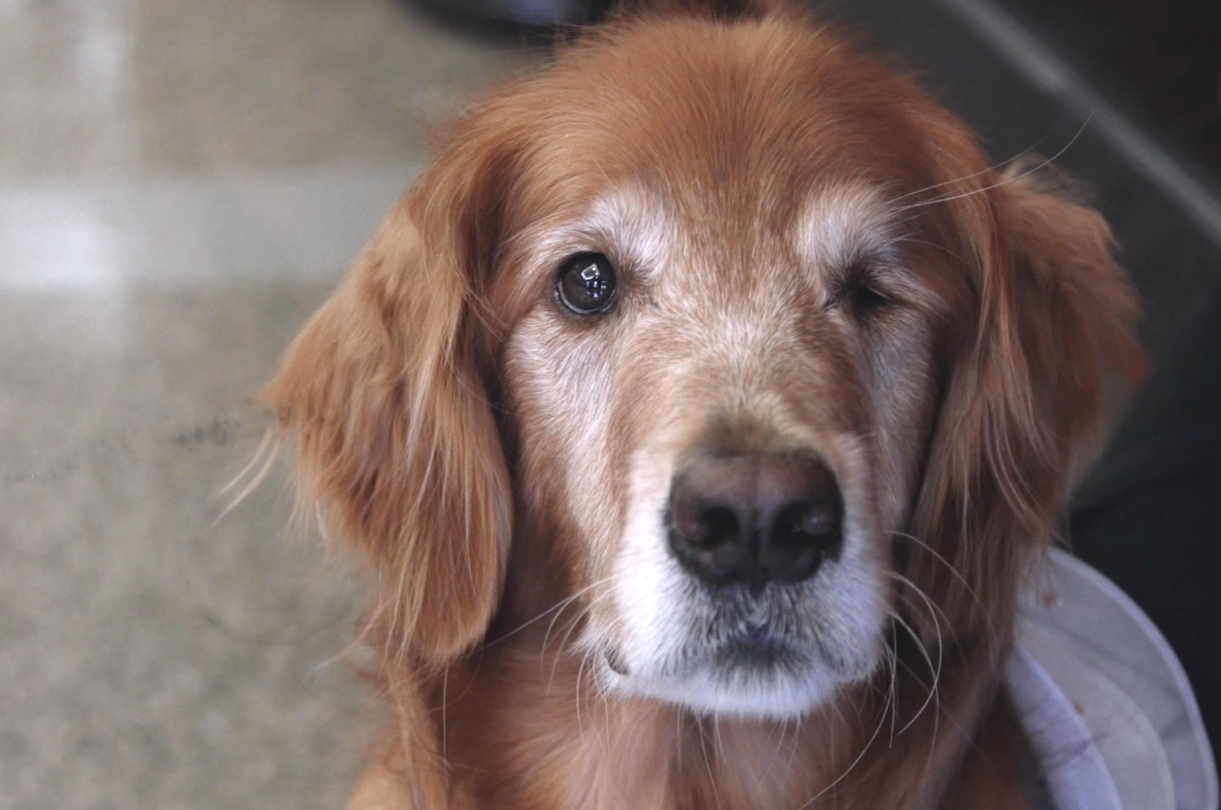 Dog Behavior Training Houston
