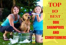 best dog shampoos andb conditioners