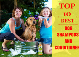 best dog shampoos andb conditioners