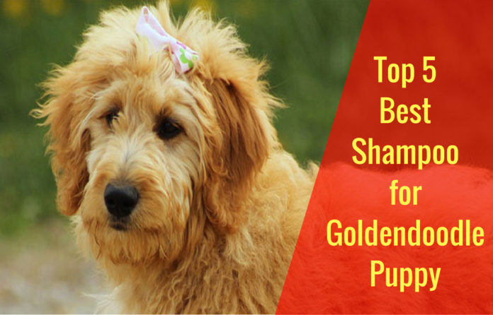best shampoo for goldendoodle puppy