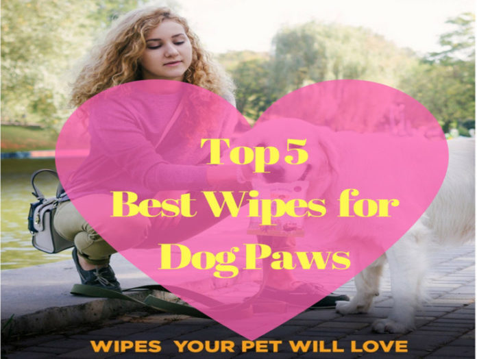Best Wipes for Dog Paws
