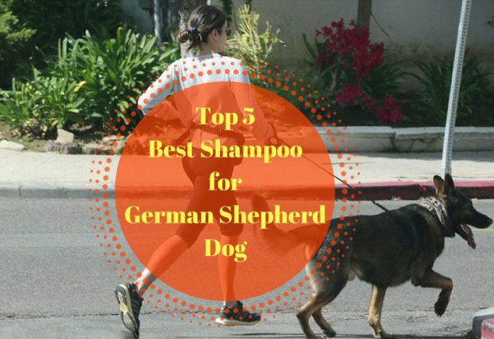 Best Shampoo for German Shepherd Dog