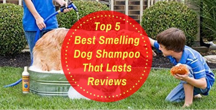 Best Smelling Dog Shampoo That Lasts