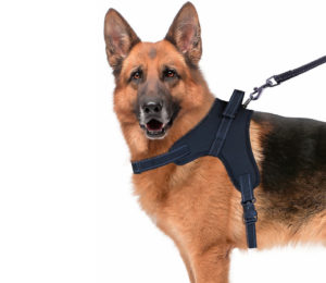 Source Iris Dog Harness, Large