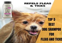best dog shampoo for fleas and ticks