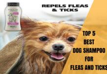 best dog shampoo for fleas and ticks