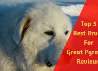 Best Brush For Great Pyrenees