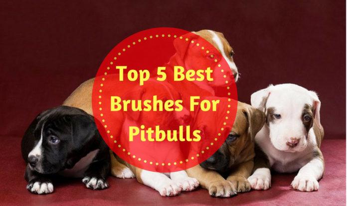 Best Brushes For Pitbulls