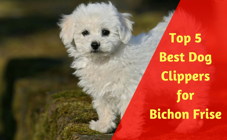 Top 5 best dog clippers for bichon frise of 2018 best dog grooming there solutioingenieria Image collections