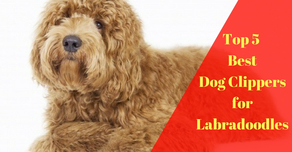 Top 5 best dog clippers for labradoodles 2018 reviews and top picks everyone solutioingenieria Gallery