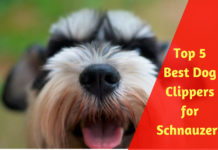 Best Dog Clippers for Schnauzers