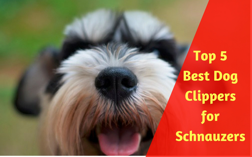 Top 5 best dog clippers for schnauzers of 2018 best dog grooming tips dog solutioingenieria Gallery