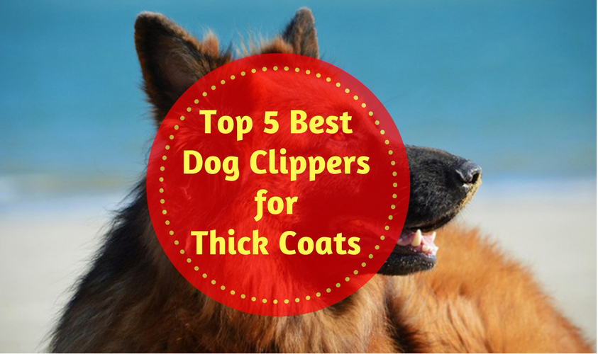 Top 5 best dog clippers for thick coats of 2018 dog grooming tips there solutioingenieria Image collections