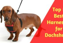 Best Harnesses for Dachshunds