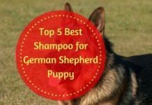 Best Shampoo for German Shepherd Puppy
