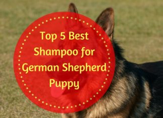 Best Shampoo for German Shepherd Puppy