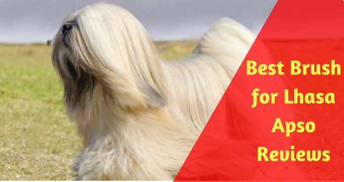 Best Brush for Lhasa Apso