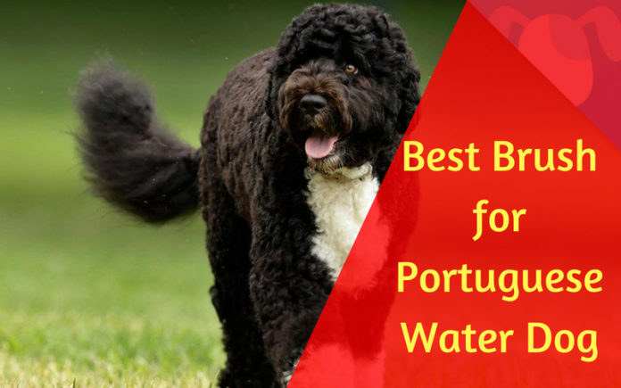 Best Brush for Portuguese Water Dog