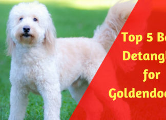 Best Detangler for Goldendoodles