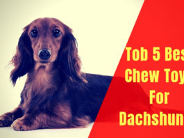 Best Chew Toys For Dachshunds