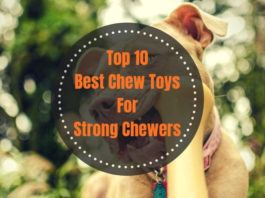Best Chew Toys For Strong Chewers
