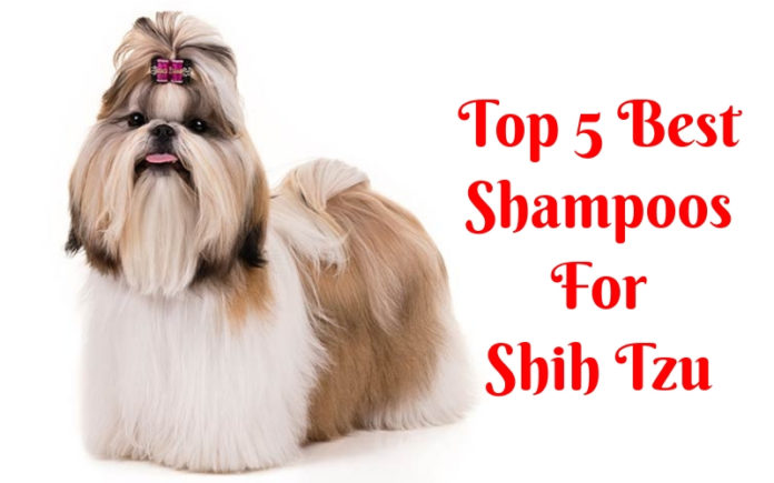 Best Shampoos For Shih Tzu