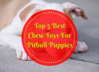 Best Chew Toys For Pitbull Puppies