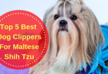 Best Dog Clippers For Maltese Shih Tzu