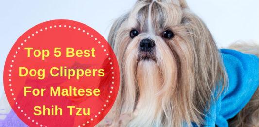 Best Dog Clippers For Maltese Shih Tzu