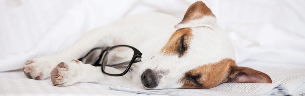 disturb your dog during sleep